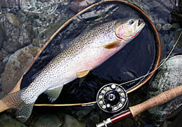 Fly Fishing BC Canada