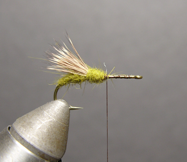 Triple Wing Caddis Step Two