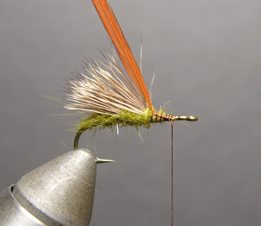 Triple Wing Caddis Step Three