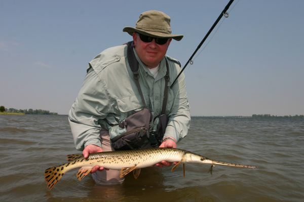 Nice Spotted Gar Pike