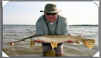 Fly Fishing For Gar Pike In Ontario