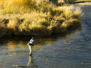 Crowsnest River, Alberta fly fishing